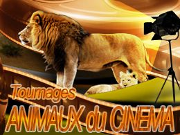Location d'animaux de cinema
